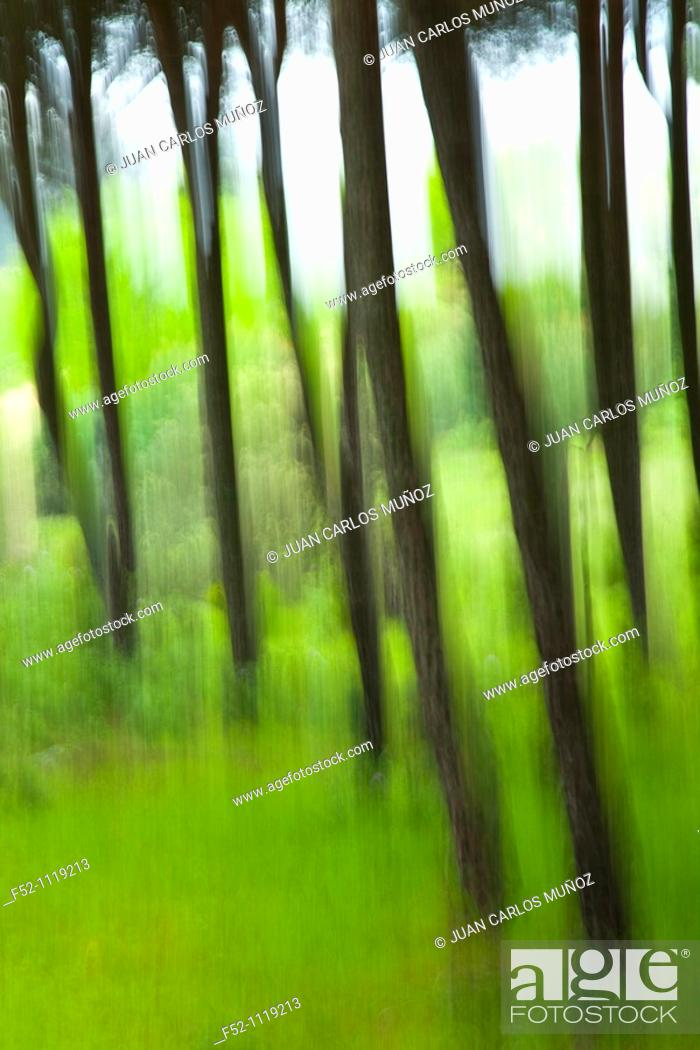 Stock Photo: Pine forest in spring, Andujar Natural Park, Jaen, Andalusia, Spain.