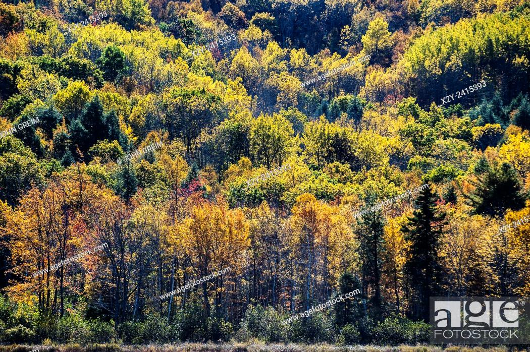 Photo de stock: Backlit autumn trees, Acadia National Park, Maine, USA.