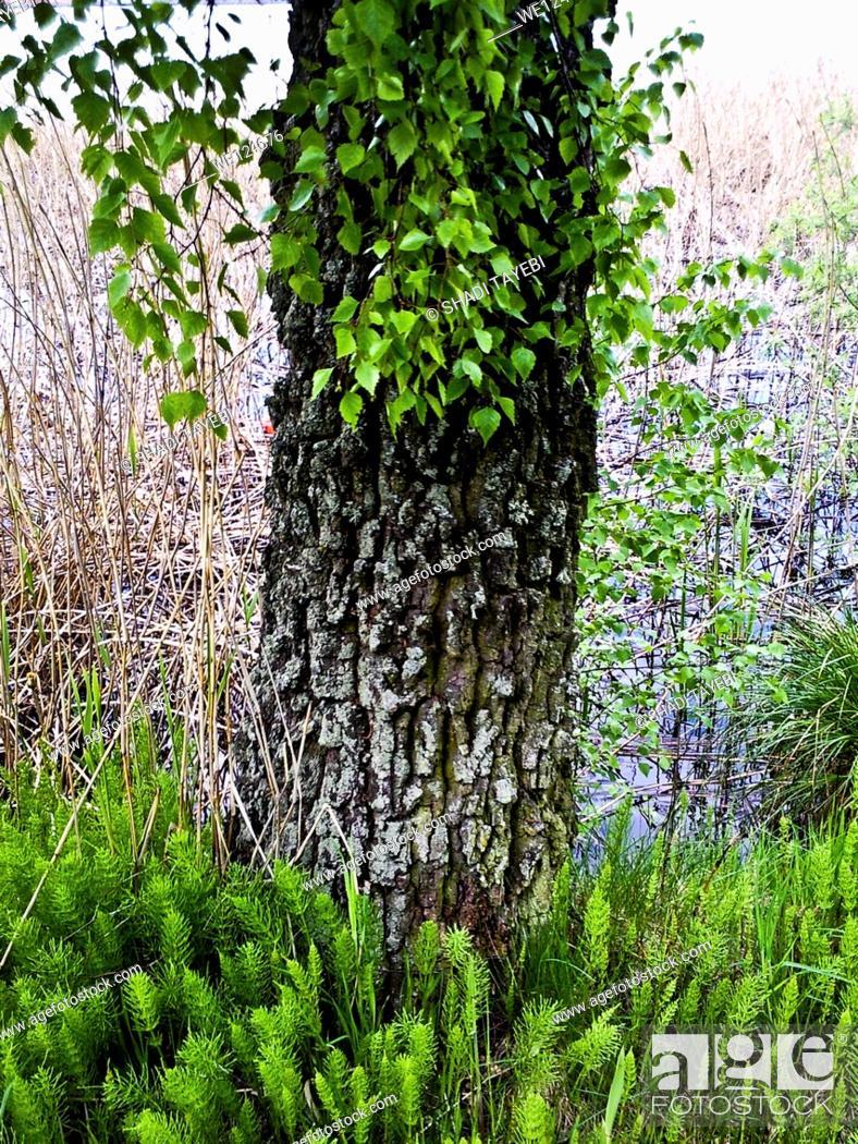 Stock Photo: Tree body.