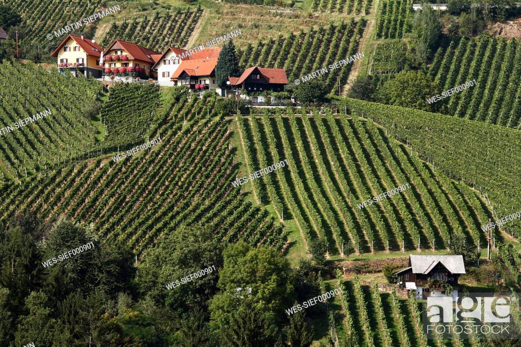 Stock Photo: Austria, Styria, View of vineyard at schilcher weinstrasse.