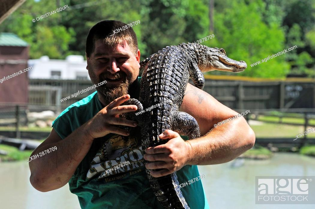 Stock Photo: man of the staff of Gator Country Wildlife Adventure Park showing a juvenile alligator to visitors, Beaumont, Texas, United States of America, North America.