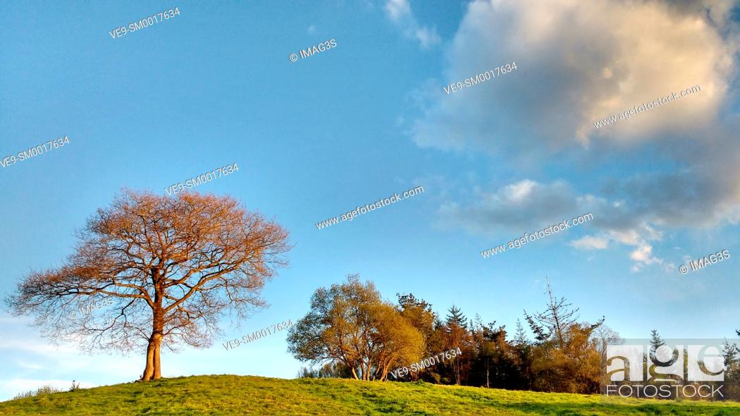 Imagen: Oak tree, Sariego municipality, Asturias, Spain.