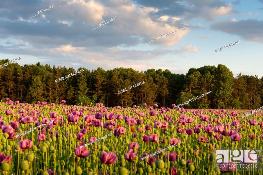Imagen: Summer rural landscape of Turiec region, Slovakia.