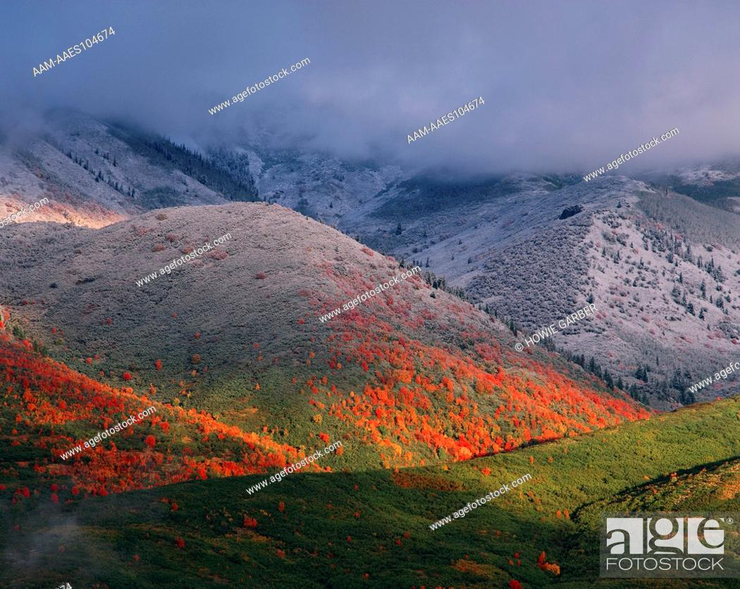 Stock Photo: Three seasons of foliage, red maples and fall snowstorm near Midway, Utah. Original: Medium Format.