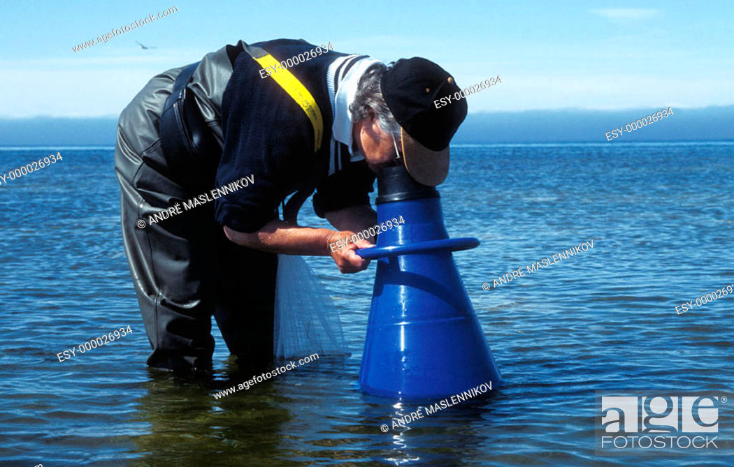 Stock Photo: Looking for algae on shallow water in the Baltic Sea.