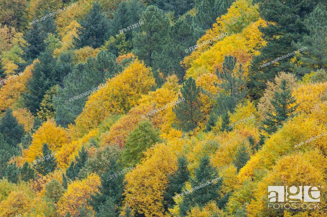 Imagen: Autumnal forest in Estrela Mountain Natural Park, Portugal.