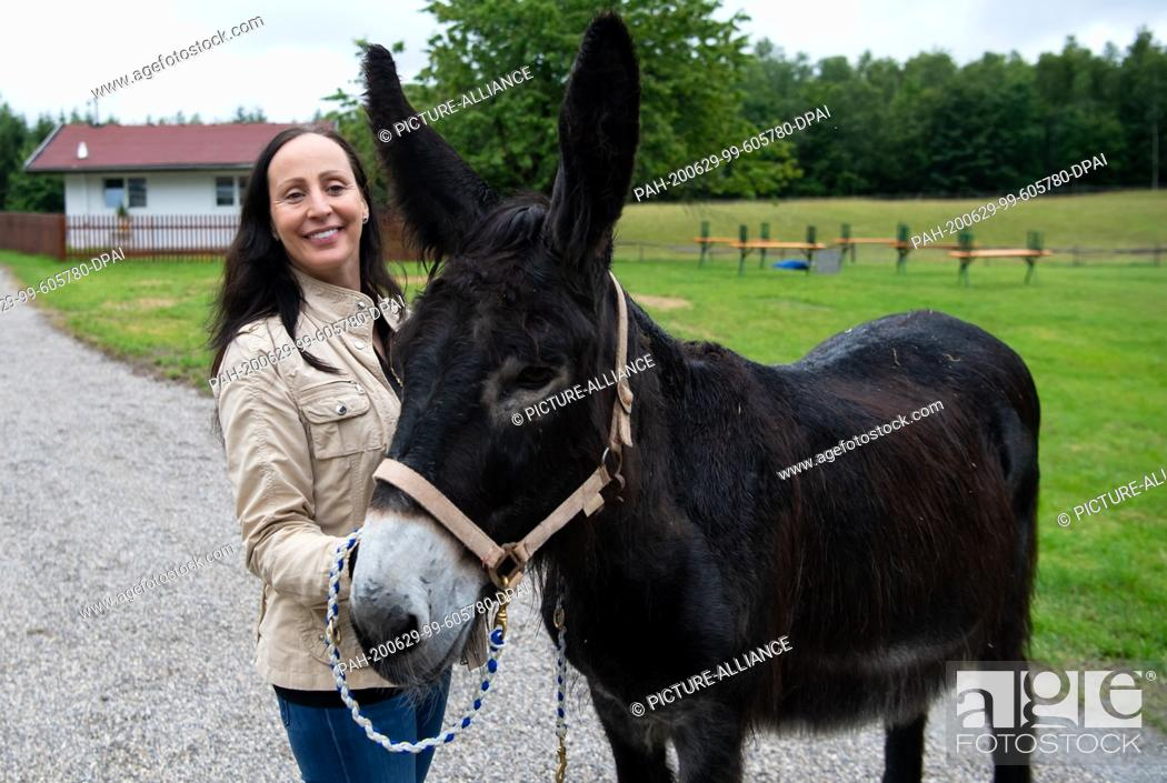 Stock Photo: 29 June 2020, Bavaria, Weßling: Jana Mandana Lacey-Krone, head of Circus Krone, takes part in a press tour at Circus Krone Farm and stands beside a donkey.