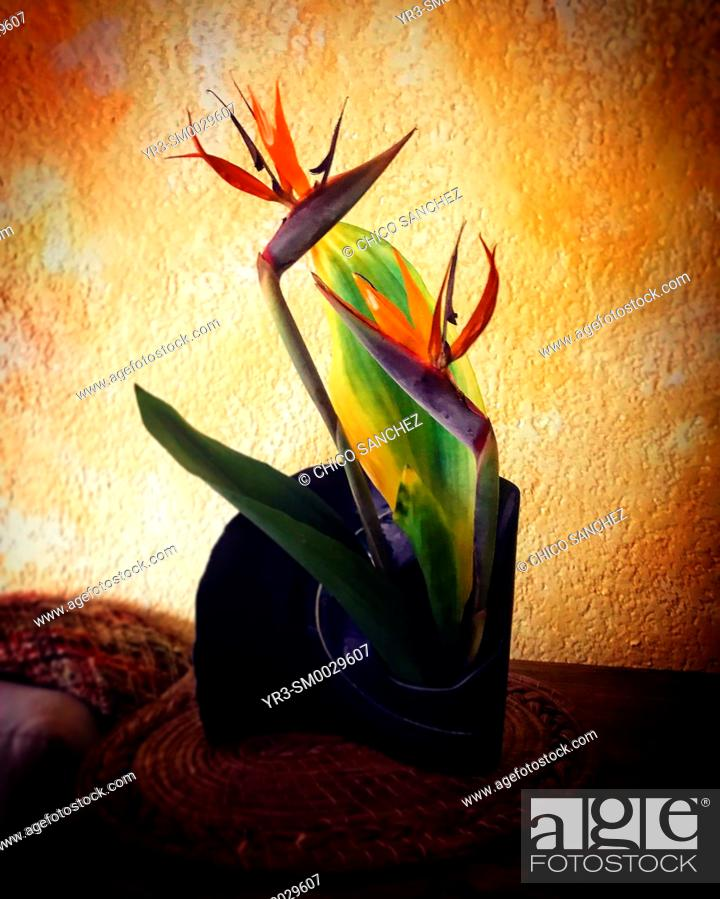 Stock Photo: Crane flowers or bird of paradise flowers decorate a home in Mexico City, Mexico.