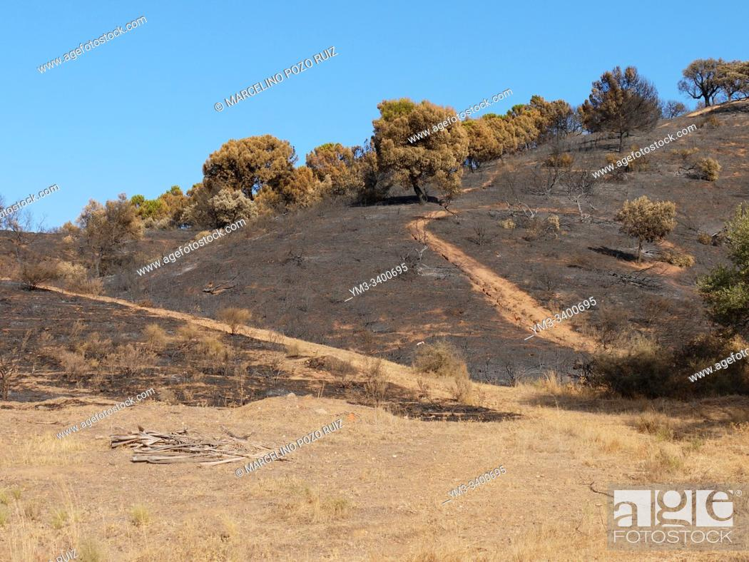Stock Photo: Mount burned by fire charred plants.