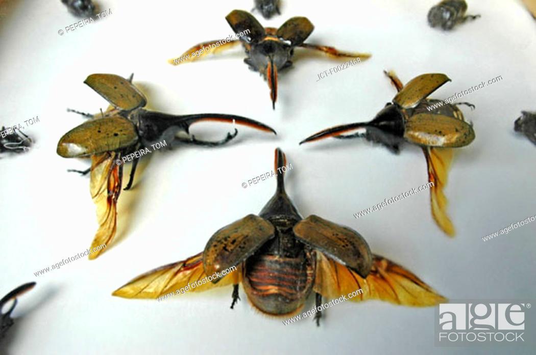 Stock Photo: Costa Rica, Sarapiqui, La Quinta Country Inn, naturalized insects.
