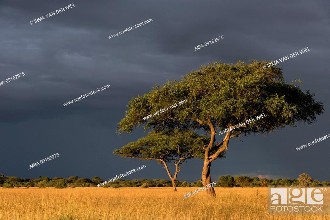 Stock Photo: Tanzania, Northern Tanzania, Serengeti National Park, Ngorongoro Crater, Tarangire, Arusha and Lake Manyara, thunderstorm mood.