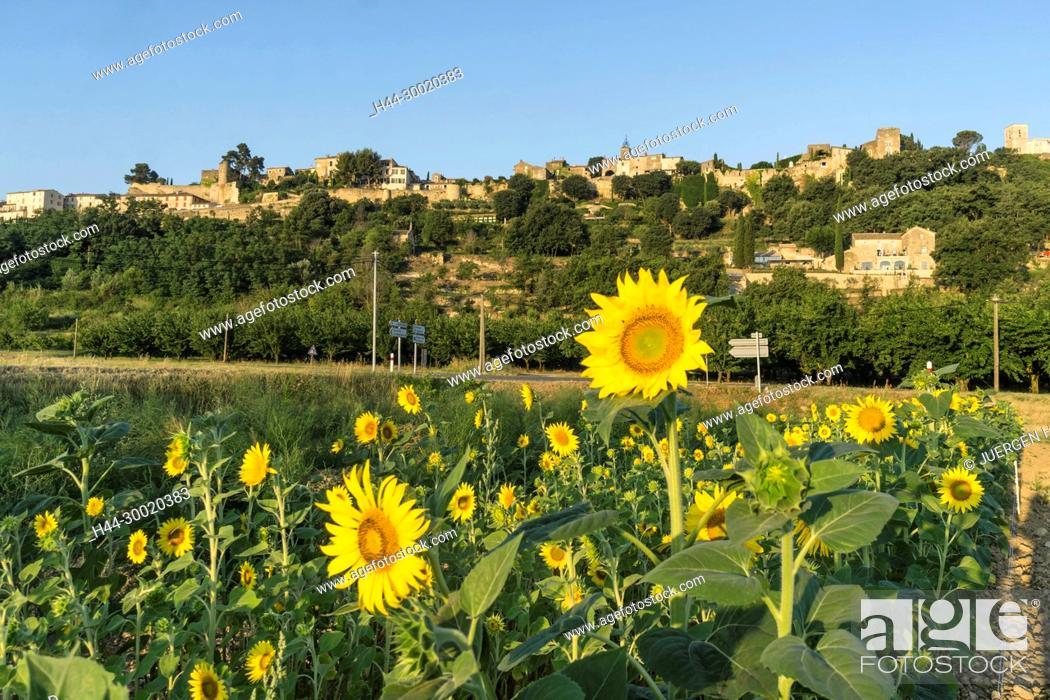 Stock Photo: France, Alpes-de-Haute-Provence, Luberon, vineyard near Menerbes, labelled Les Plus Beaux Villages de France, The Most Beautiful Villages of France, France.