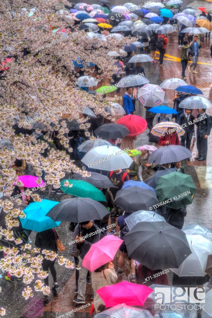 Stock Photo: Shibuya Crossing pedestrians with multi colored umbrellas in the Shibuya district of Tokyo, Japan, Asia.