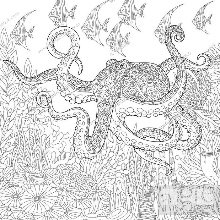 Seaweed Coloring Page - Seaweed Plant Clipart Black And White, HD ... | 700x701
