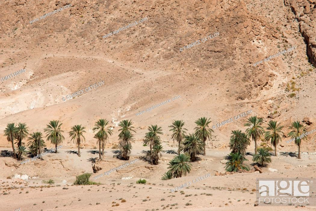 Imagen: Tunisia - Between Chebika and Tamerza - Palm trees around a mountain oasis close to Chebika.