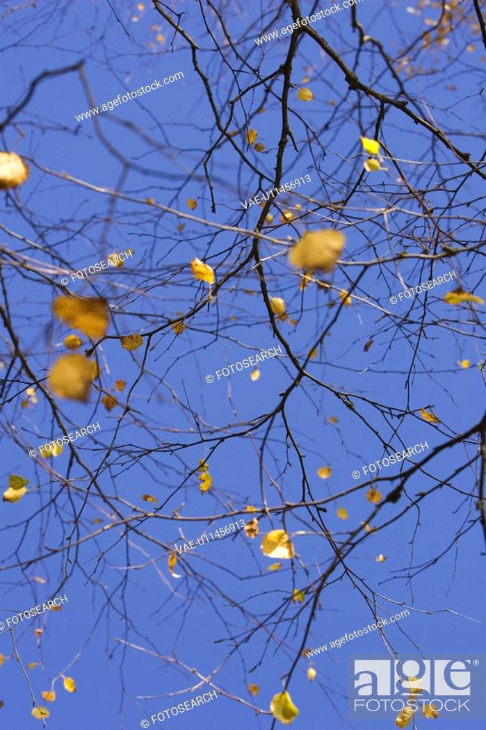 Stock Photo: Close-Up, Bare Tree, Clear Sky, Branch, Blue, Autumn.