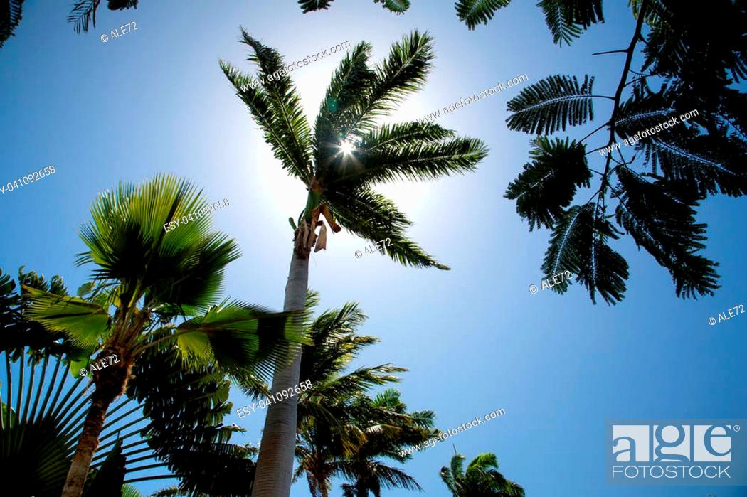 Imagen: Antigua, white sand and palm on Long Beach.