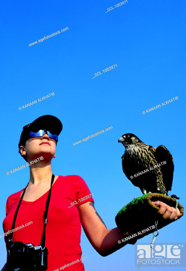 Stock Photo: Western tourist holding a falcon on gloved arm, United Arab Emirates.