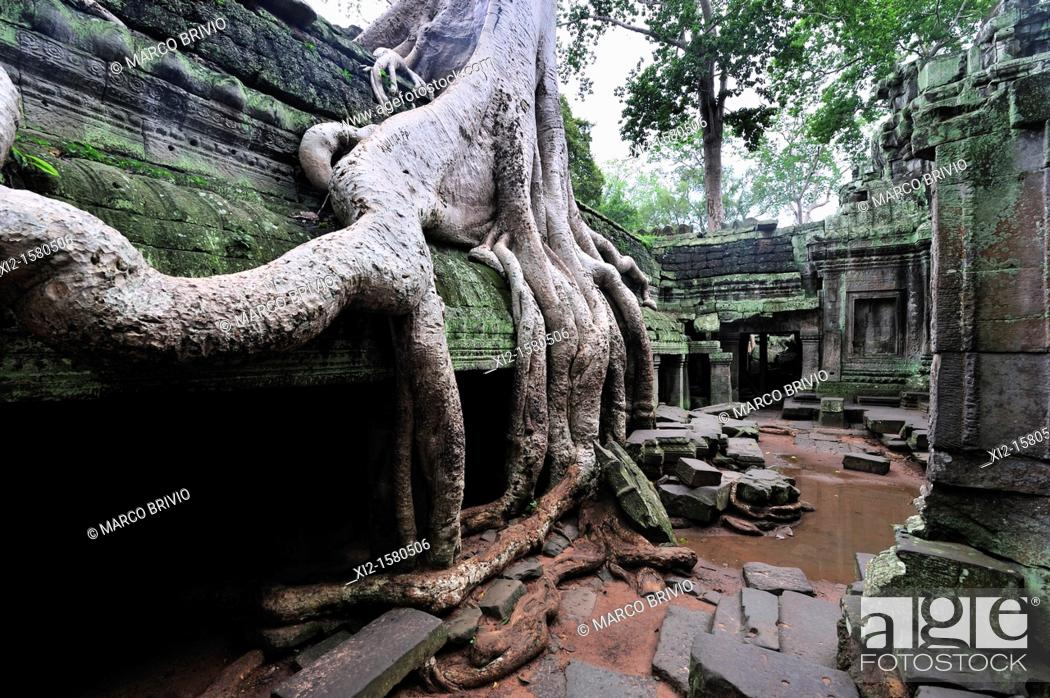 Stock Photo: Ta Prohm temple overtaken by trees, Angkor Wat, Siem Reap, Cambodia.