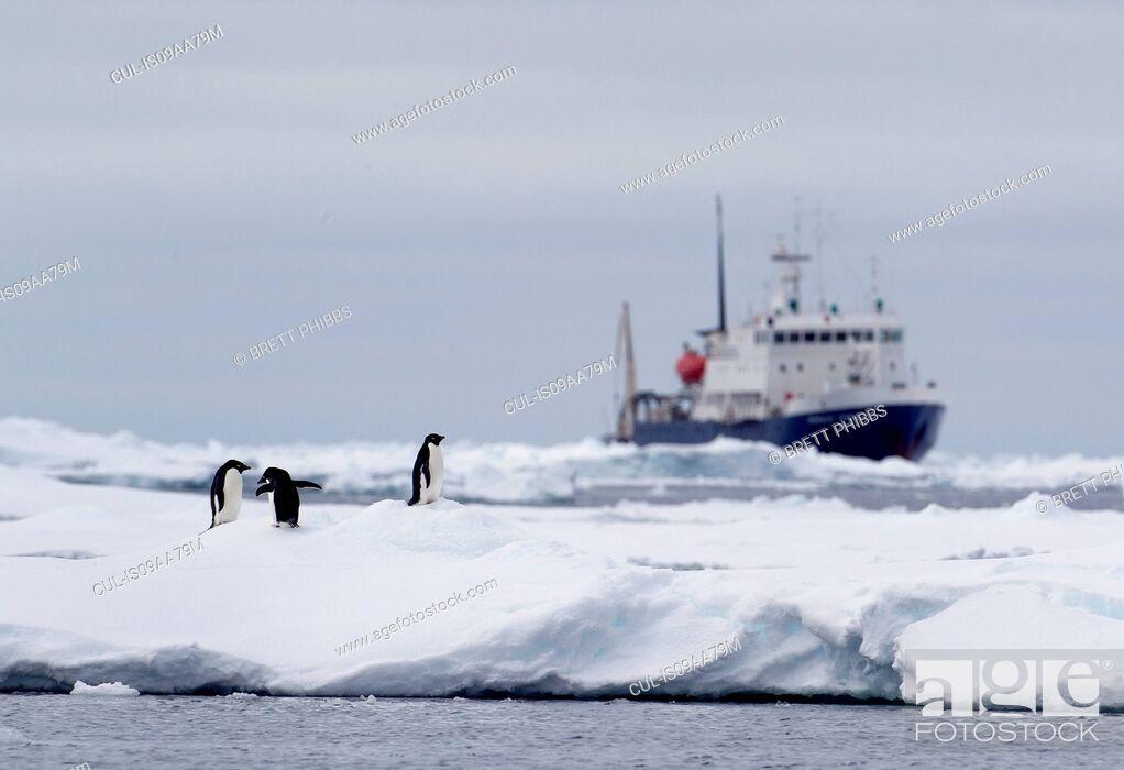 Imagen: Adelie Penguins on ice floe, ship in distance in the southern ocean, 180 miles north of East Antarctica, Antarctica.