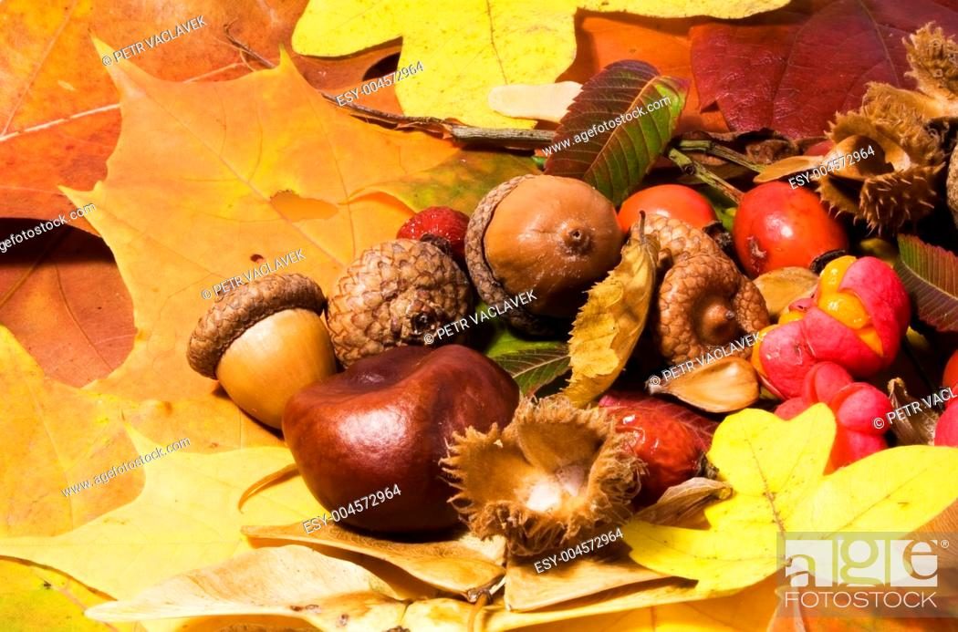 Stock Photo: Autumn still life.