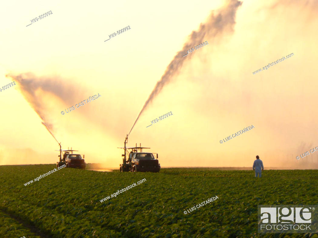 Stock Photo: Sprinkling Crops. Florida (USA).