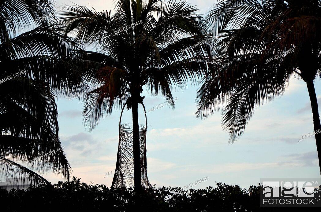 Imagen: Palms Tree, Hotel Setai, Miami, USA.