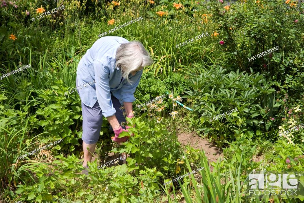 Stock Photo: Woman working in her garden.