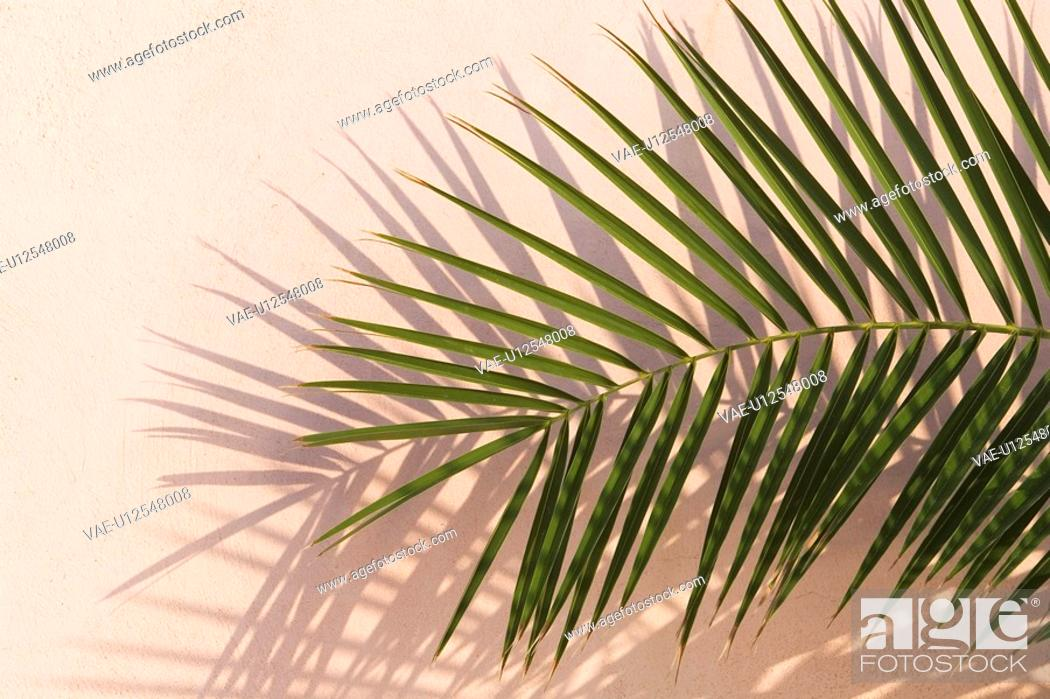Stock Photo: Close-Up, Colored Background, Day, Frond, Green.
