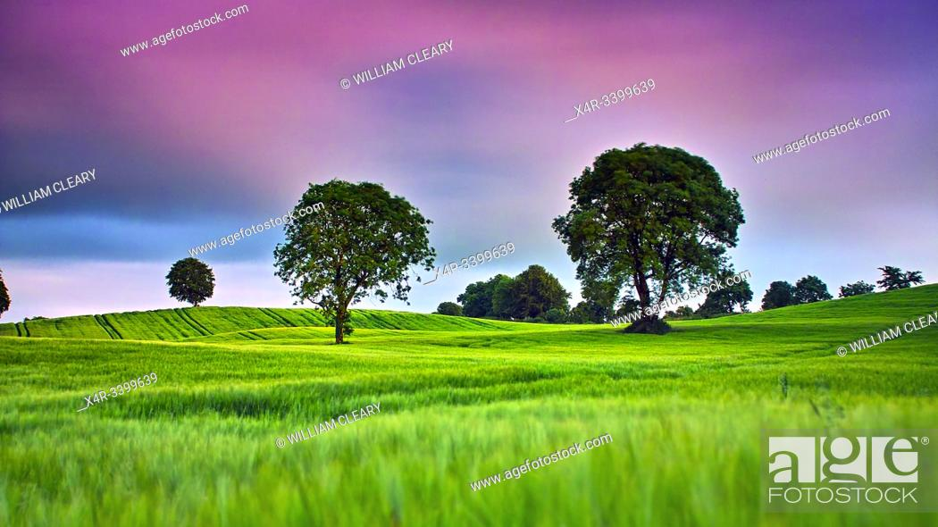 Stock Photo: Barley field, Coolnahay, County Westmeath.