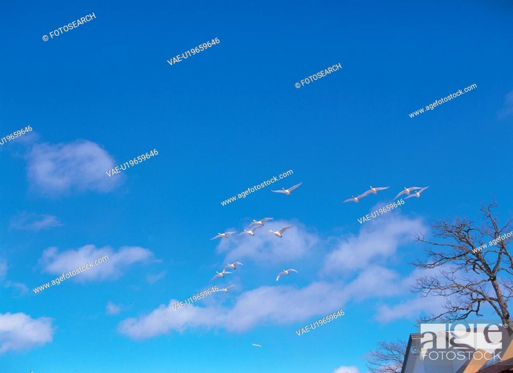 Stock Photo: sky, animal, scenery, nature, bird, film.