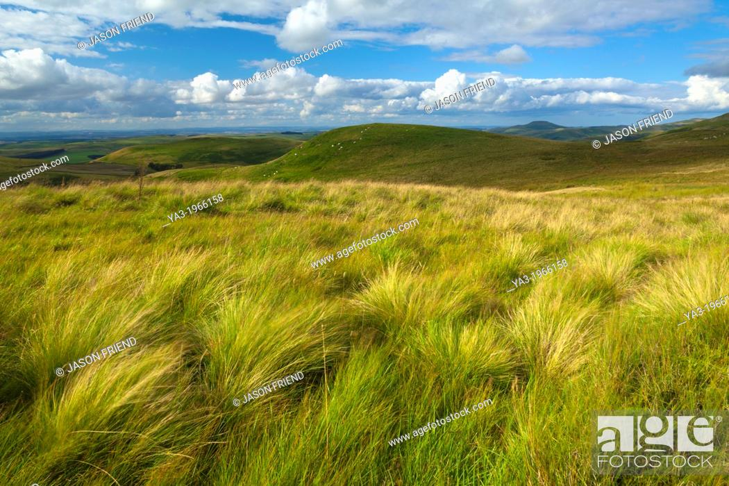 Stock Photo: Scotland, Scottish Borders, English Border / Northumberland National Park. Looking towards the Northumberland Cheviot Hills in England from the Scottish Border.