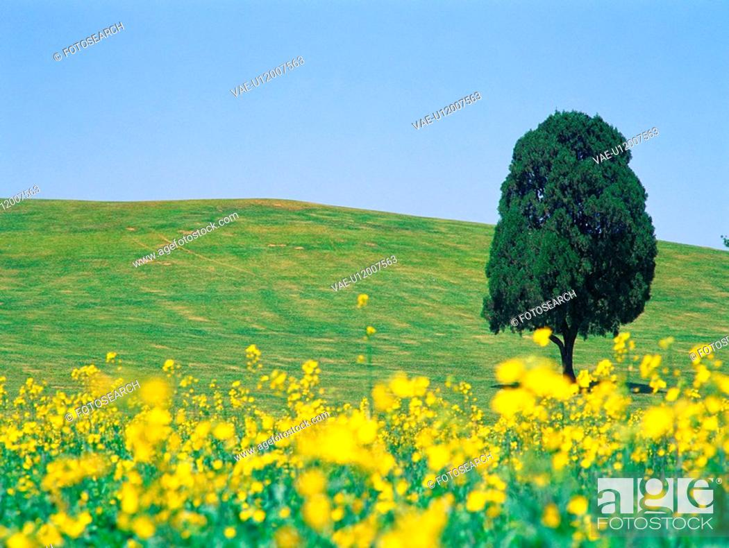 Stock Photo: flower, scenery, sky, grass, plain, season, nature.