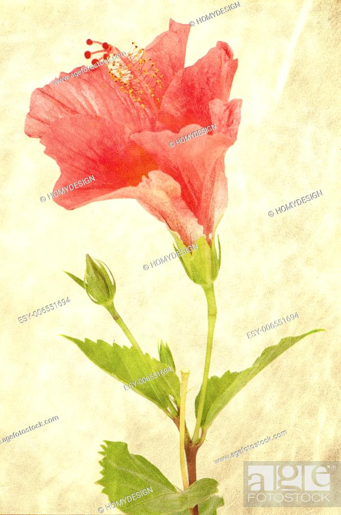 Stock Photo: Textured background with pink hibiscus flower.