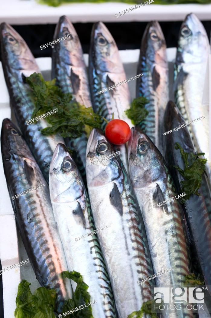 Stock Photo: mackerels, mediterranean fish at market in Naples, Italy.