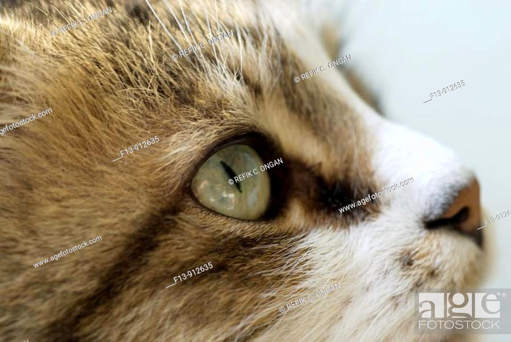 Stock Photo: cat portraid.