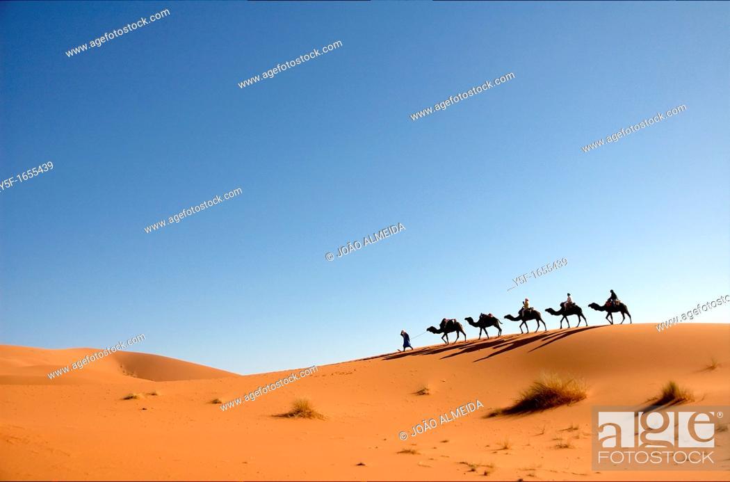 Stock Photo: Lined up camel caravan at the sand dunes of the Sahara desert.