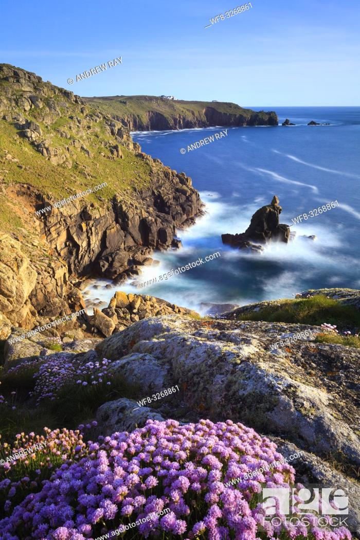 Stock Photo: Sea thrift on Mayon Cliff, near Sennen Cove in the far West of Cornwall captured in late May.