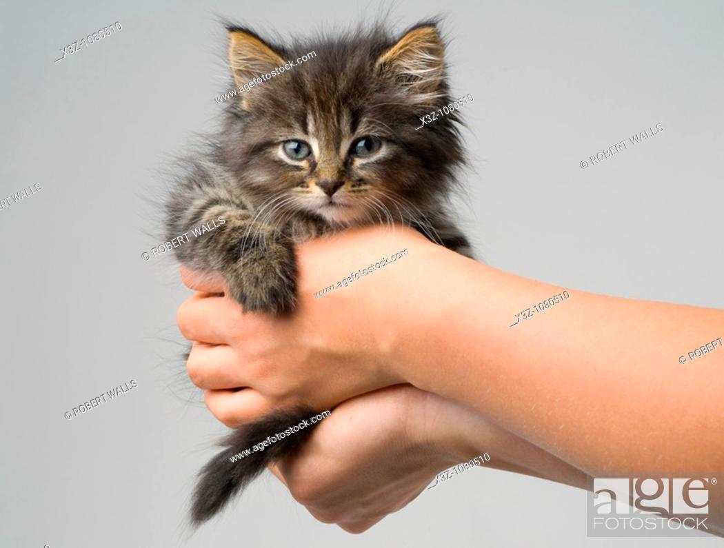 Stock Photo: Cute six week old kitten.