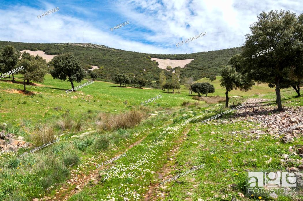 Photo de stock: Dirt road in Toledo Mountains, Ciudad Real Province, Spain.