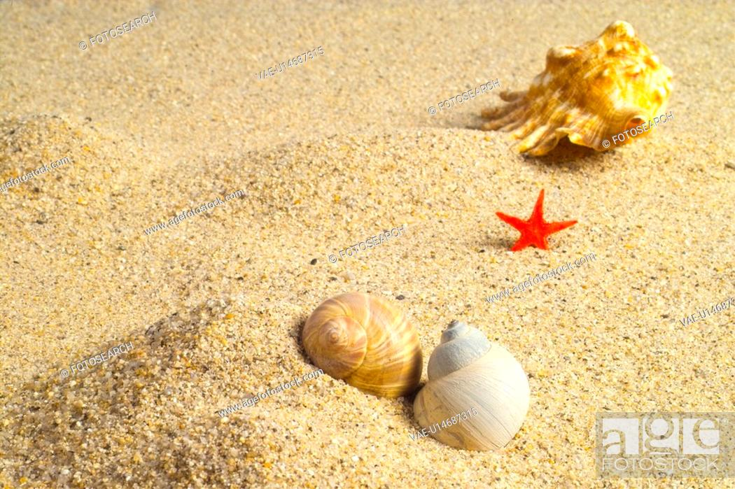 Stock Photo: mollusks, crustacea, mollusk, animal, decorations, mollusc, conch.