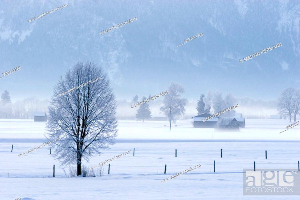 Stock Photo: Winter morning. Grossweil, Bavaria, Germany.