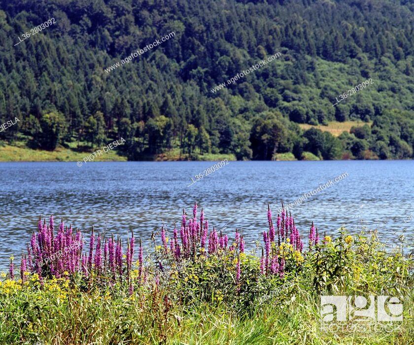 Stock Photo: Poland. Beskid Niski mountains. Klimkowka Lake.
