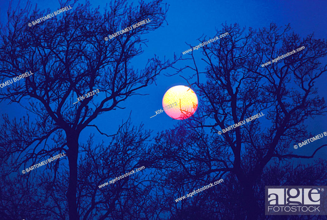 Stock Photo: Sunset through tree silhouettes.