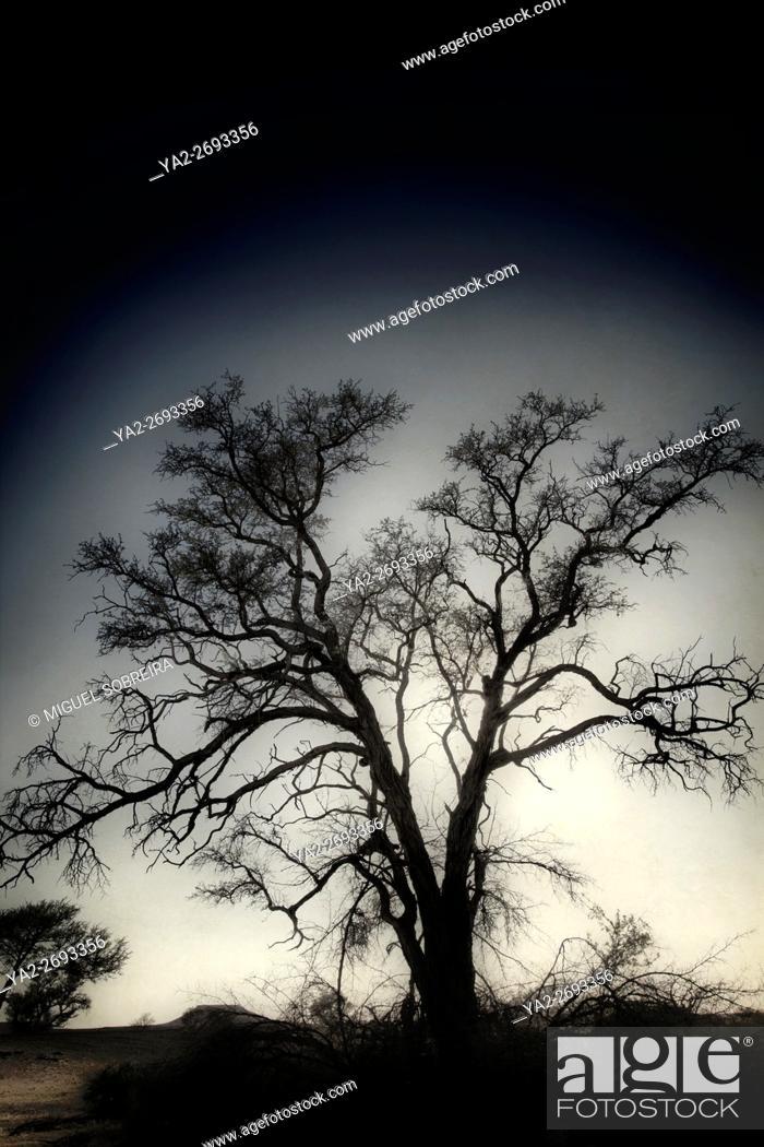 Stock Photo: Arid Tree.