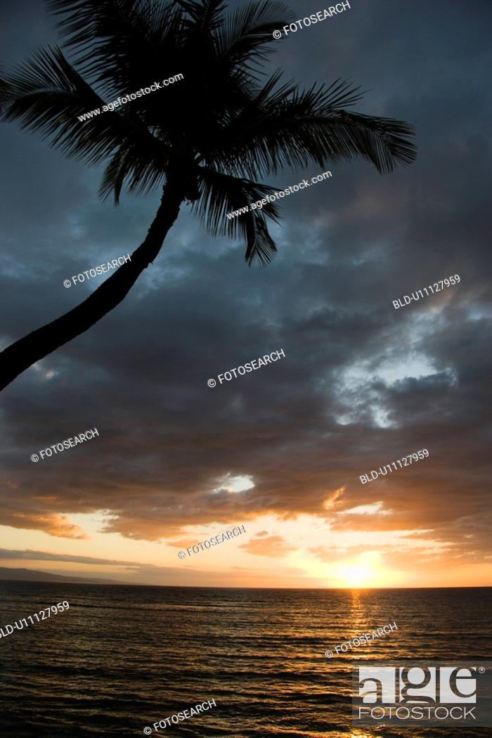 Stock Photo: Sunset over Pacific Ocean with palm tree.