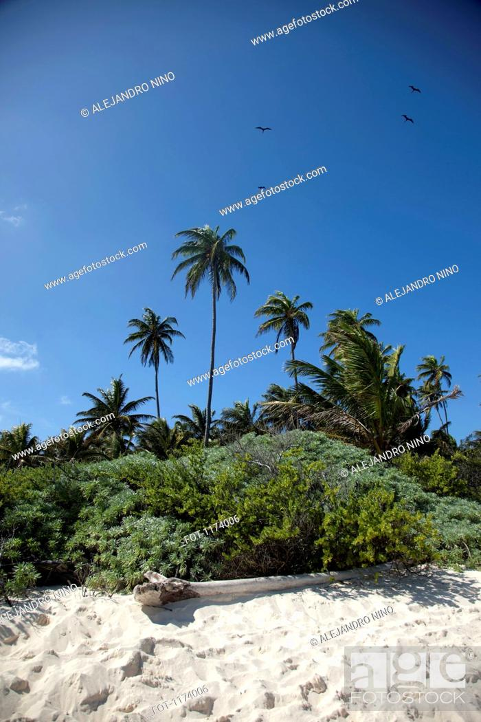 Stock Photo: Palm trees and lush foliage on a beach in.