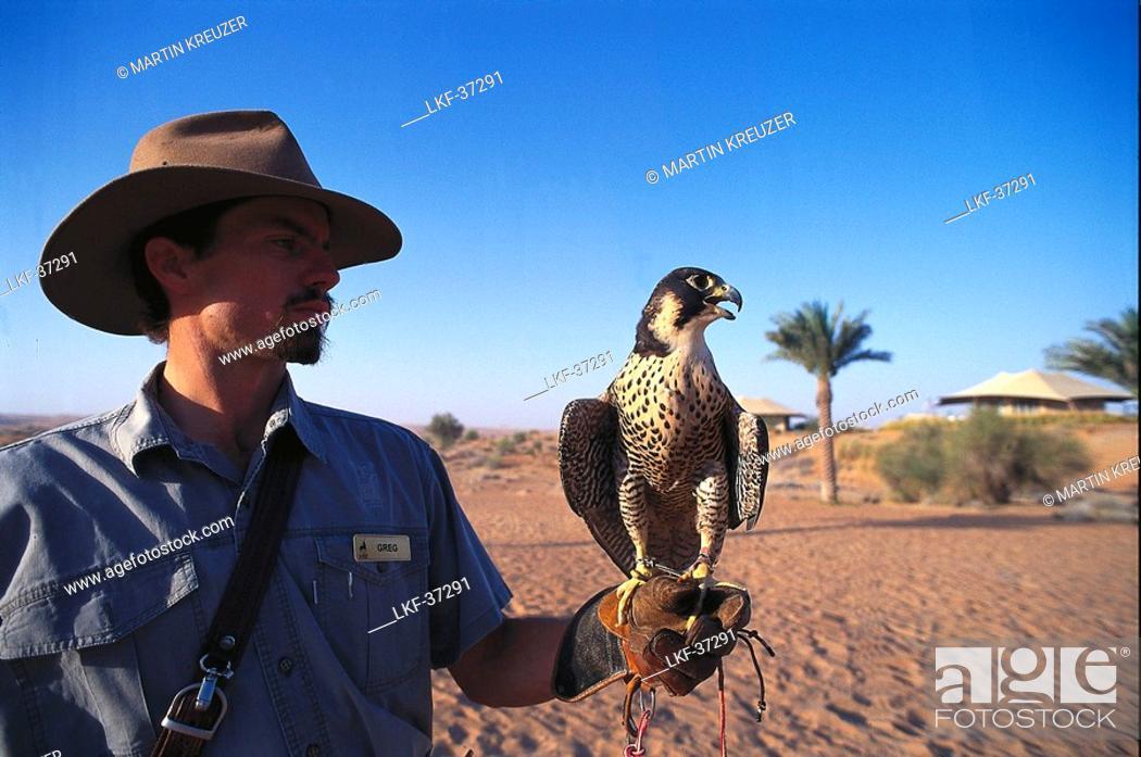 Man with hunting falcon, Al Maha Desert Resort, Dubai, V A E, Stock