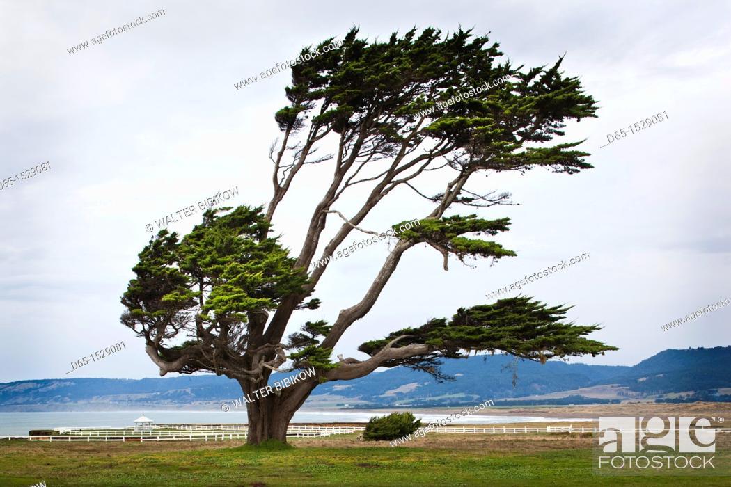 Stock Photo: USA, California, Northern California, North Coast, Point Arena, coastal landscape.
