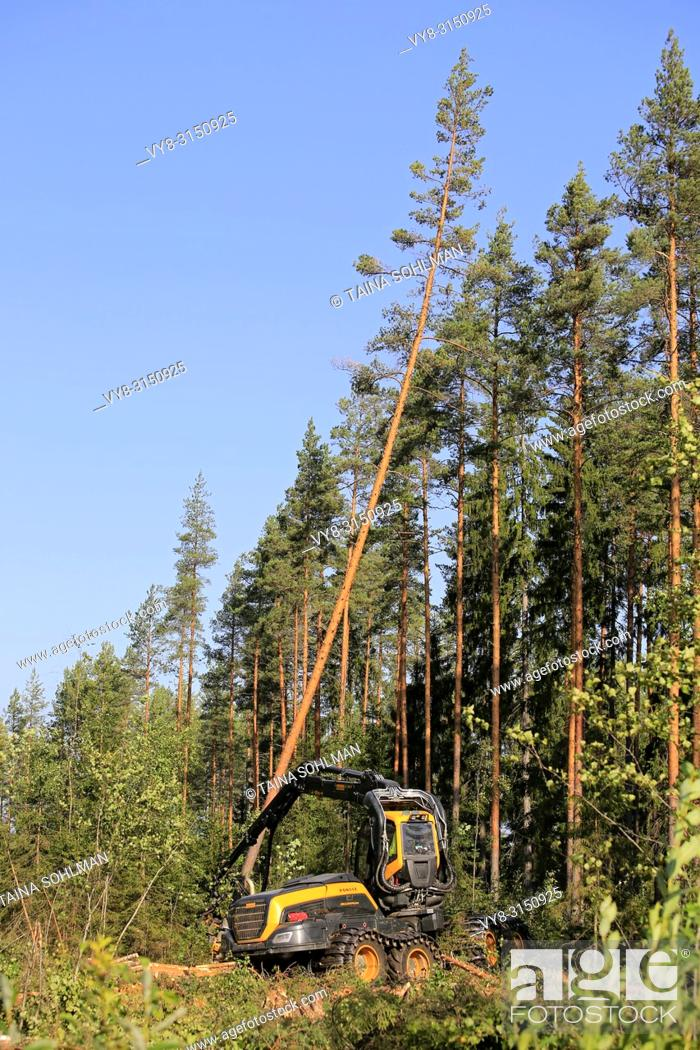 Stock Photo: Ponsse Scorpion forest machine operator is cutting and sawing a pine tree at forest logging site on a sunny day. Jyvaskyla, Finland - August 24, 2018.